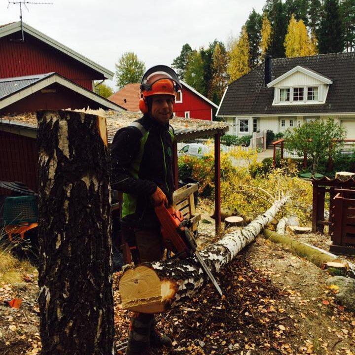 Trädfällning